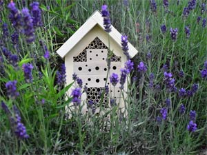 Wildbienenhotel im Lavendelfeld